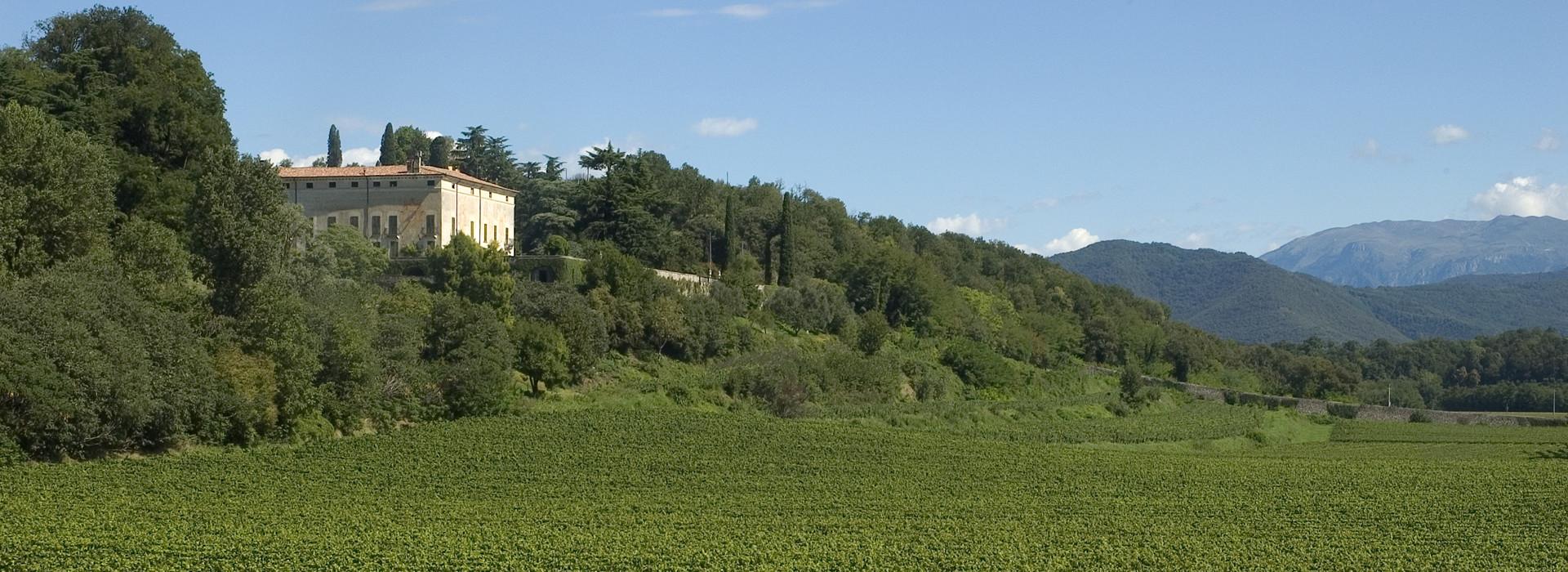 Marchese Antinori - Tenuta Montenisa