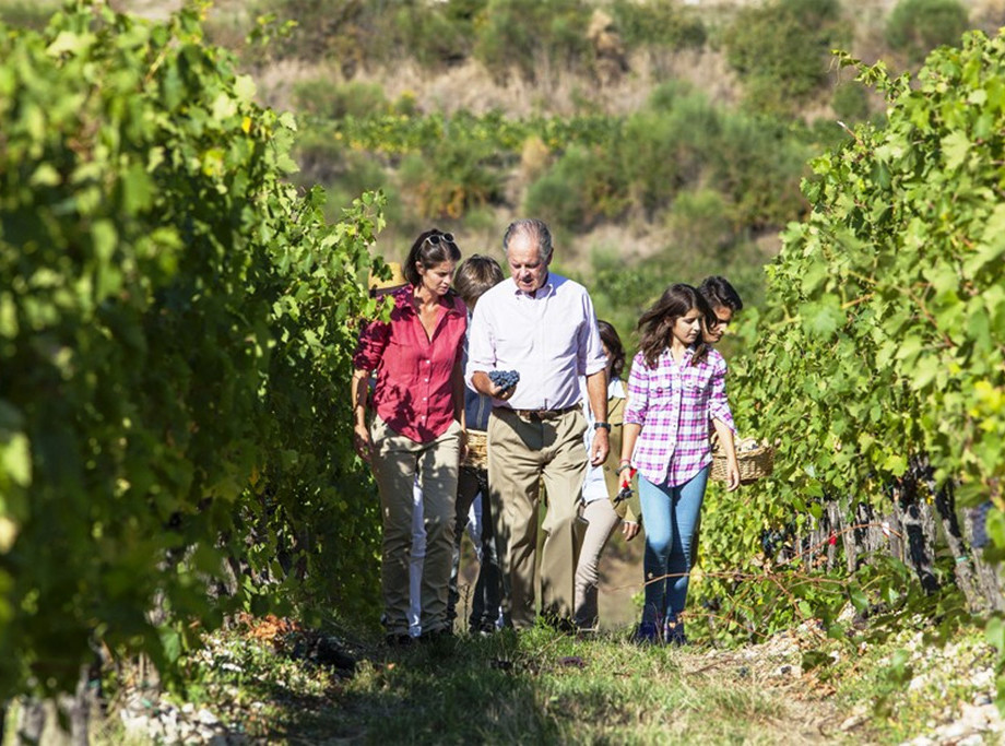 Antinori family walking in vineyards