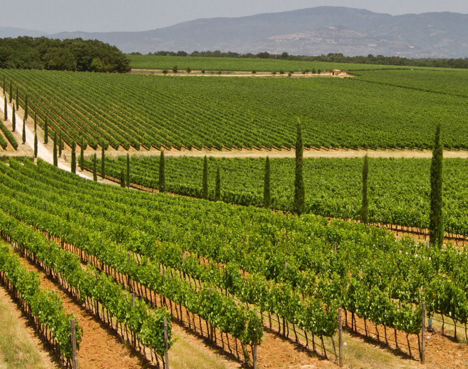 The Vineyards. Tradition and Innovation